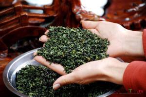Чай Тегуаньинь в руках