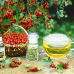 Ягоды и чай из боярышника