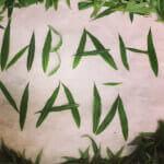 Зеленая трава иван чая