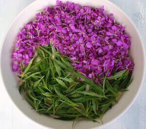 Чашка с цветками иван чая
