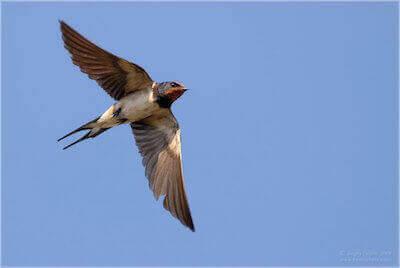 «Волшебный пендель» для худеющих: чай «Летящая ласточка»