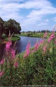 Река рядом с полем иван чая