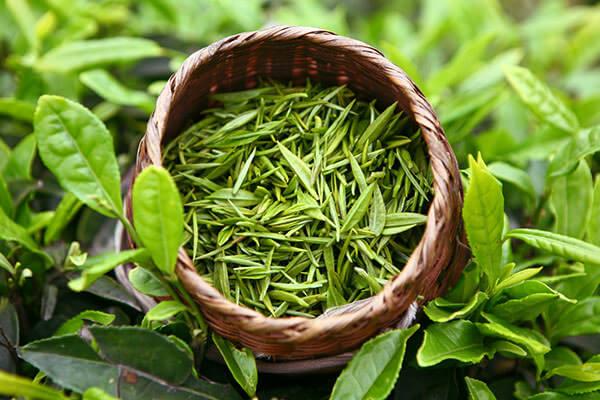 Чудесный зеленый чай выращивают на плантациях в Китае