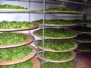 Хранение зеленого чая в специальных морозильных камерах