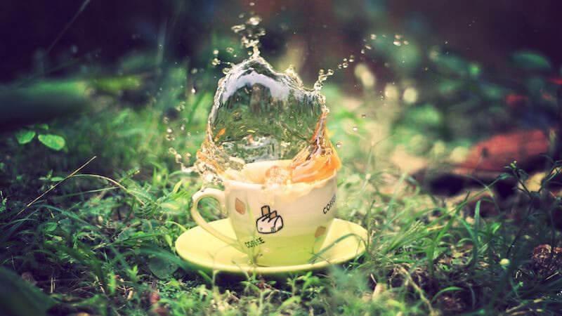 Белый чай — удовольствие для истинных ценителей качества