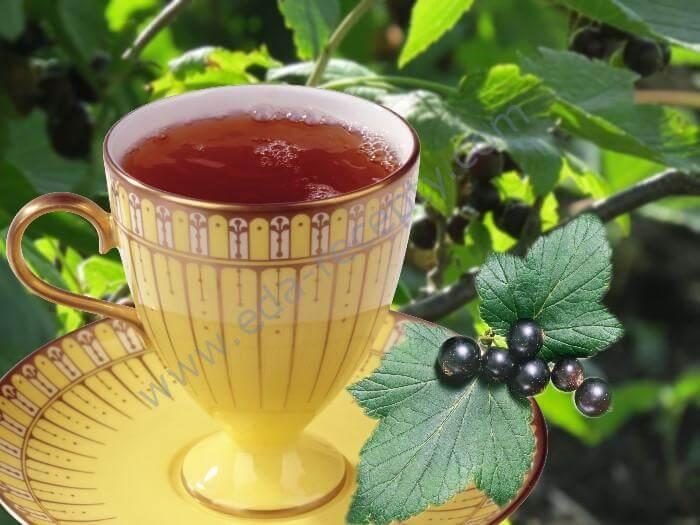 В чем польза чая из листьев смородины